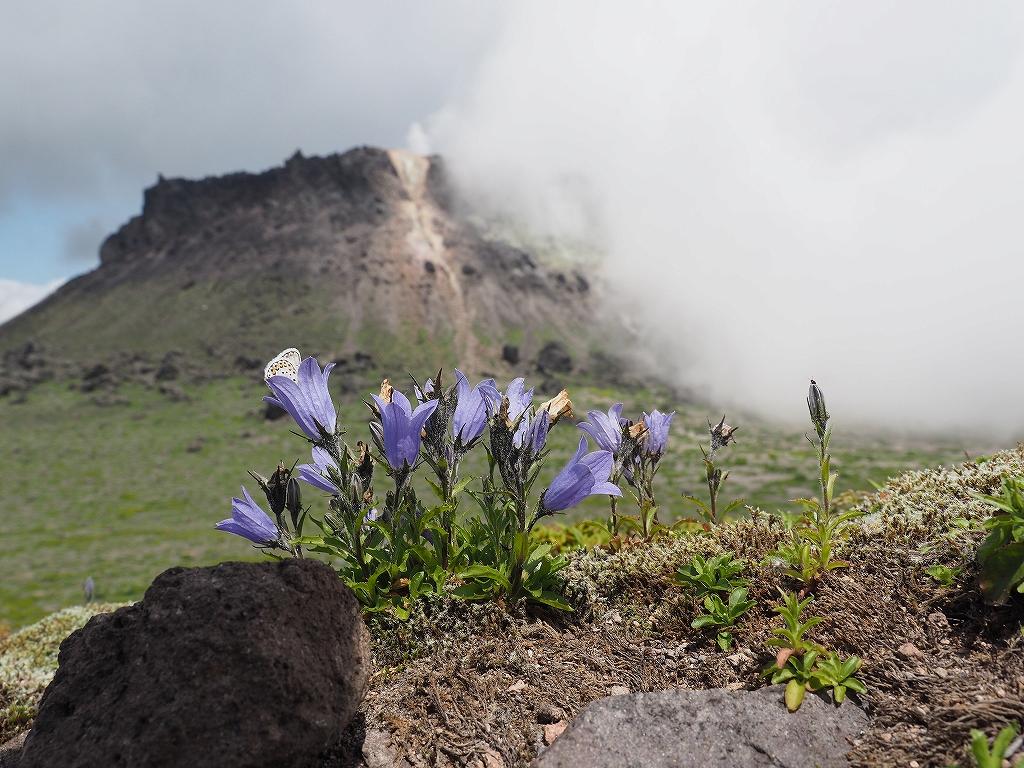タルマエソウ見納めの樽前山、7月24日-その2-_f0138096_20464345.jpg