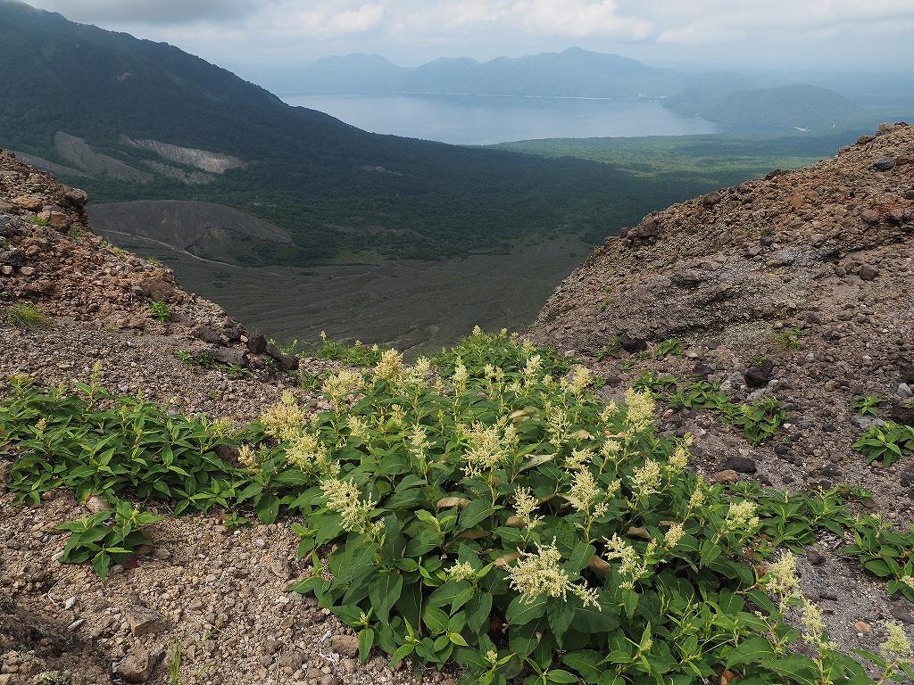 タルマエソウ見納めの樽前山、7月24日-その2-_f0138096_20473553.jpg
