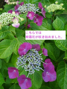 b0200310_2226210.jpg