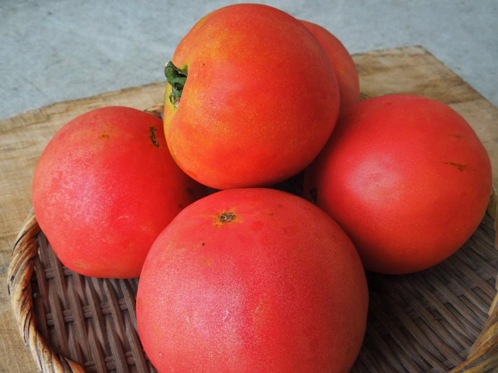 「夏トマト 2015」_a0120513_20124477.jpg
