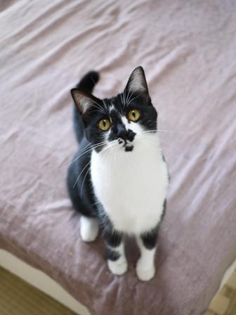 猫のお留守番 クルルちゃんタマラちゃん編。_a0143140_2231166.jpg