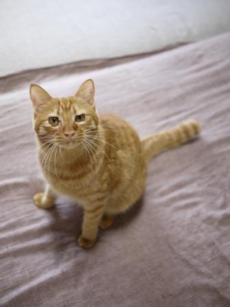 猫のお留守番 クルルちゃんタマラちゃん編。_a0143140_22313768.jpg