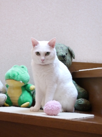 猫のお留守番 ゆきちゃんゆめくんあられくん編。_a0143140_2312686.jpg