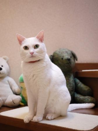 猫のお留守番 ゆきちゃんゆめくんあられくん編。_a0143140_2383560.jpg