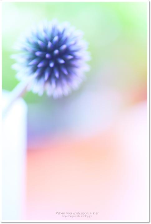 b0233456_18391326.jpg