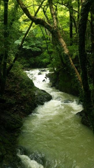大雨の箕面滝道_d0202264_09032488.jpg