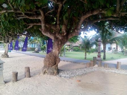 サヌールの海辺にある木(その5)_d0083068_9134457.jpg