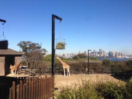 第658号 / シドニーの動物園と海岸沿いの素敵カフェ!_a0305009_22175220.jpg