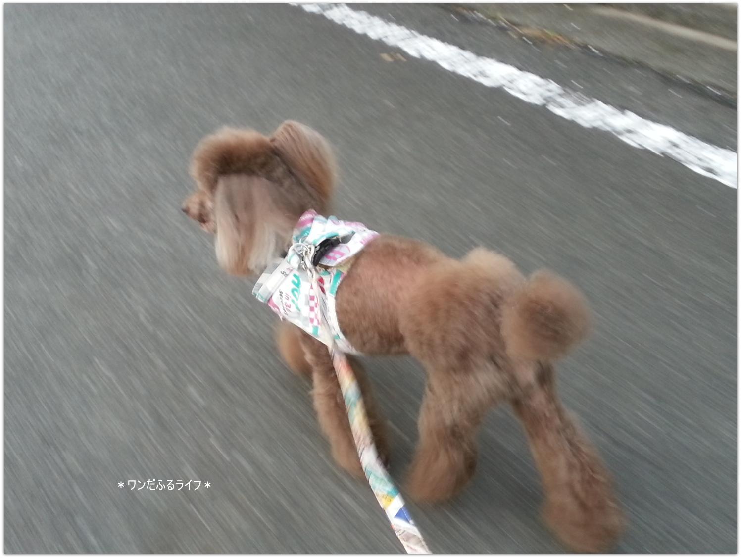 * yoru 散歩 *_d0317115_21133496.jpg