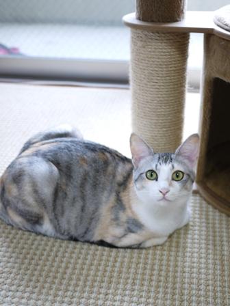 猫のお留守番 はるちゃんソルくん編。_a0143140_1922069.jpg
