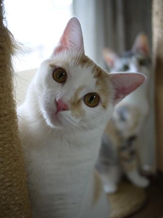 猫のお留守番 はるちゃんソルくん編。_a0143140_1924719.jpg