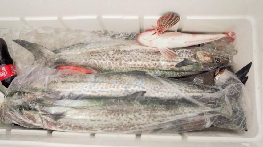 青物サワラお魚パック_e0212944_825891.jpg