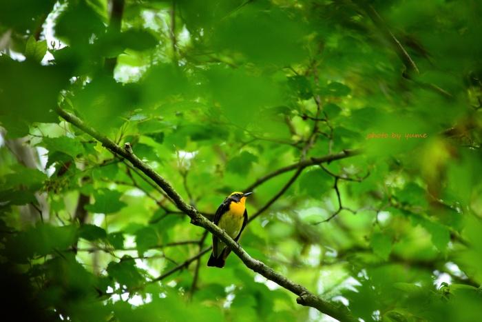 Beautiful bird_a0322950_5275428.jpg