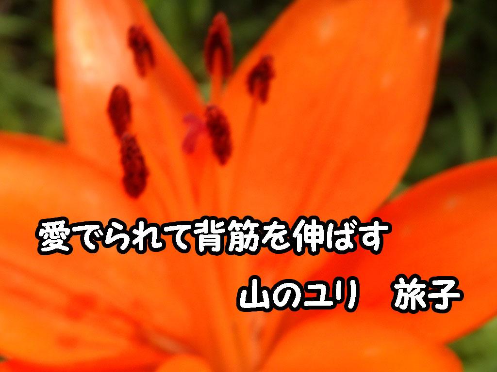 a0193457_20272753.jpg