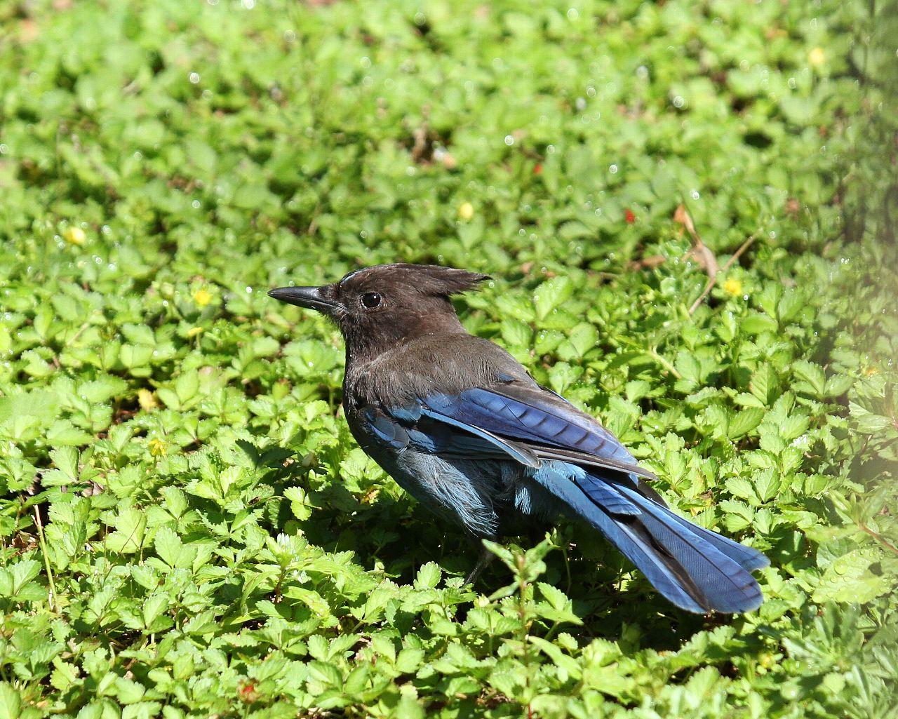 ポートランドで出逢った鳥達その3_f0105570_2138973.jpg