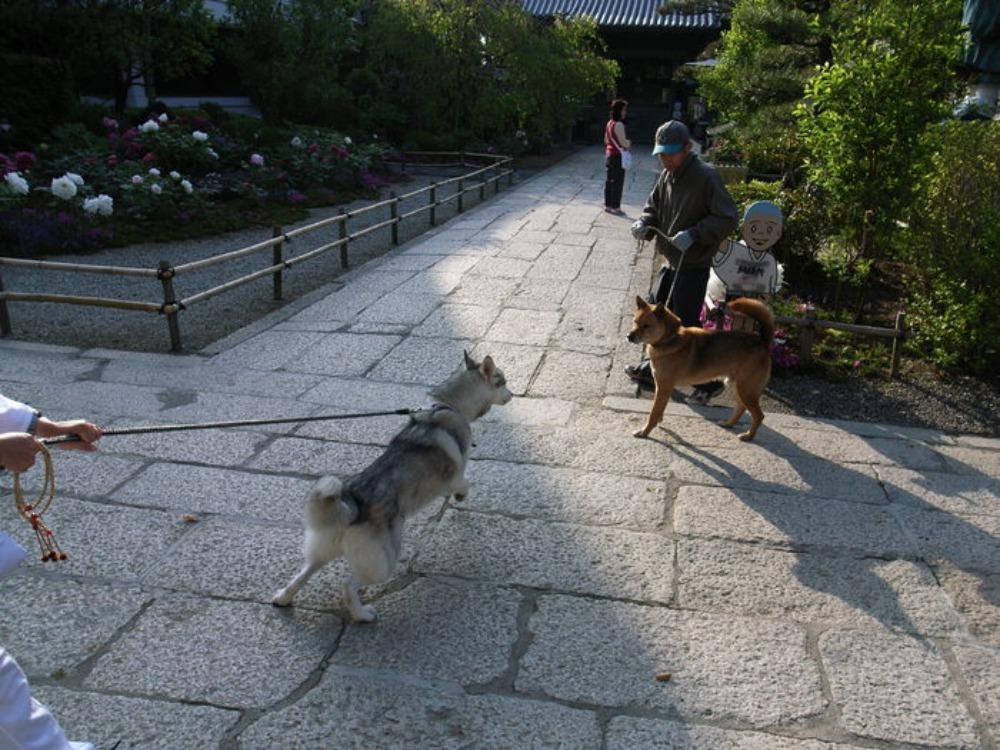 Shikoku Pilgrimage with Hana2, Apr.30th in 2006 (2)_c0049299_21511447.jpg