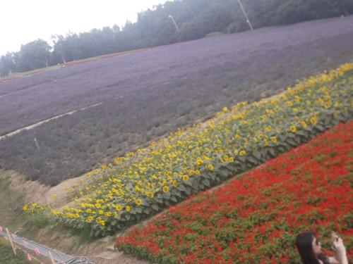 中富良野町北星山リフト_f0076001_2214195.jpg
