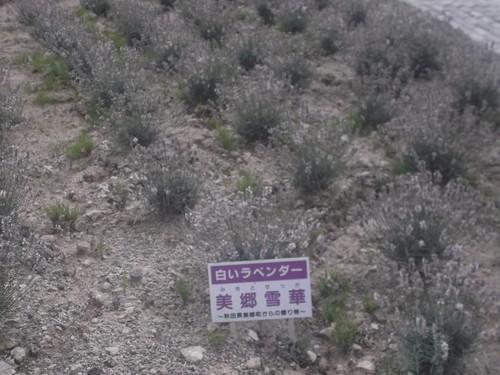 中富良野町北星山リフト_f0076001_22143548.jpg