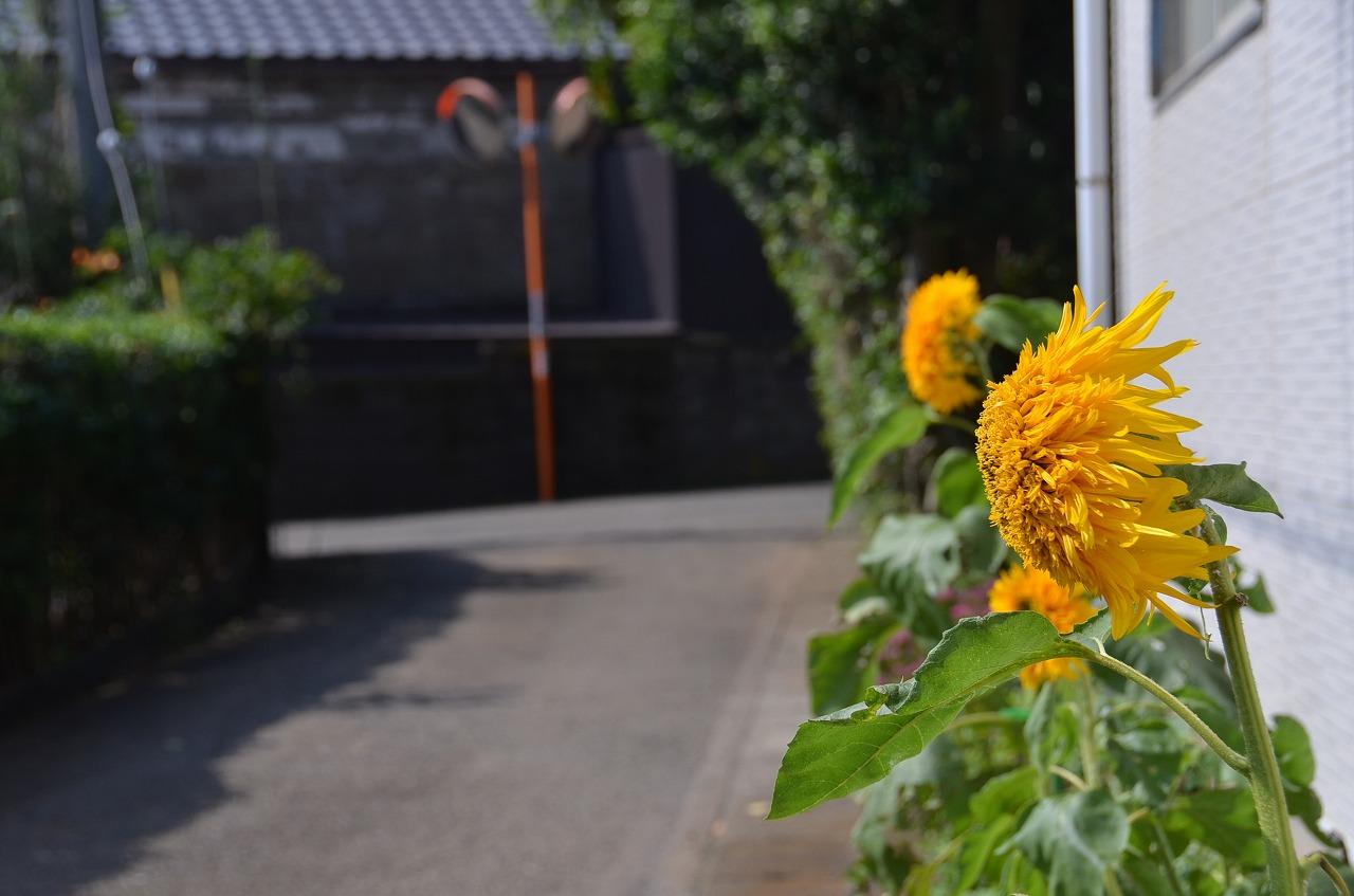 三戸浜の集落_d0065116_22453233.jpg