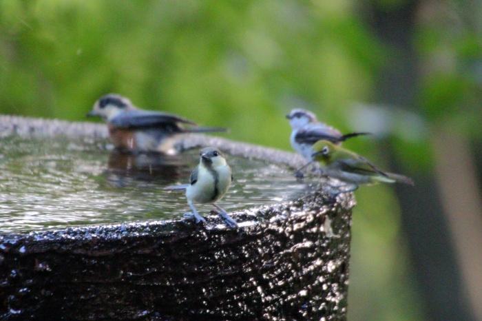 2015.7.28 鳥見に行きたい_c0269342_17132860.jpg