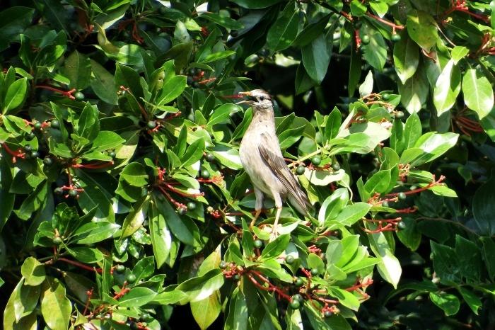 2015.7.28 鳥見に行きたい_c0269342_17435947.jpg