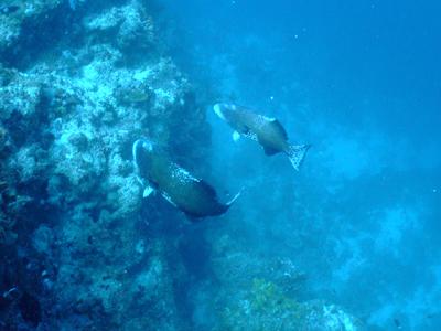 キミシマ環礁で記念ダイブ☆     JEEP IS._e0184067_18331631.jpg