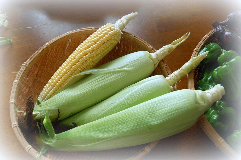 収穫~~~!_c0057390_0324922.jpg