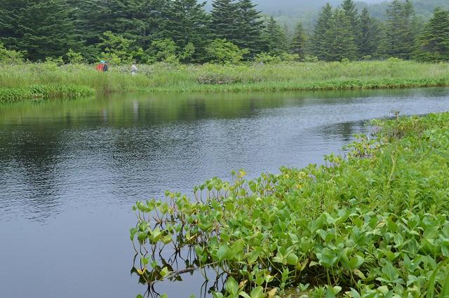 3日目:利尻・南浜湿原_c0124100_11535393.jpg