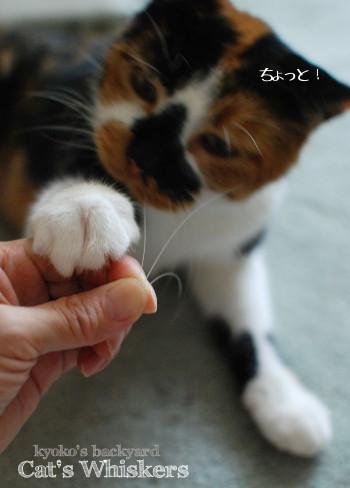 猫に猫のひげをみせびらかしたら_b0253205_03221604.jpg