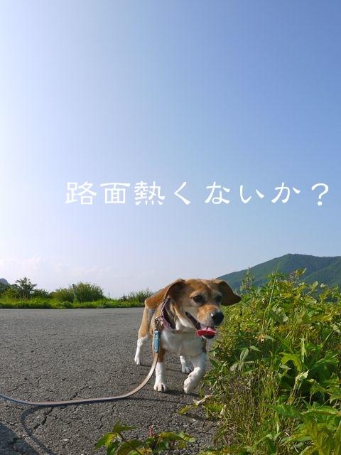 c0190940_2012139.jpg