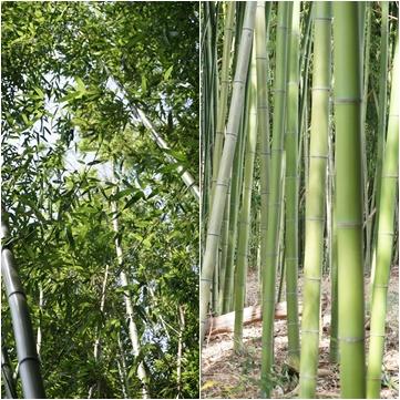 おとなの夏休み 農家体験1 ~和風の庭と蹲(つくばい)~_a0254243_947781.jpg