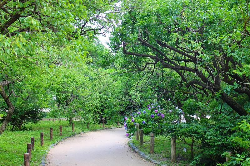 京都植物園内を散策20150625_e0237645_0254841.jpg