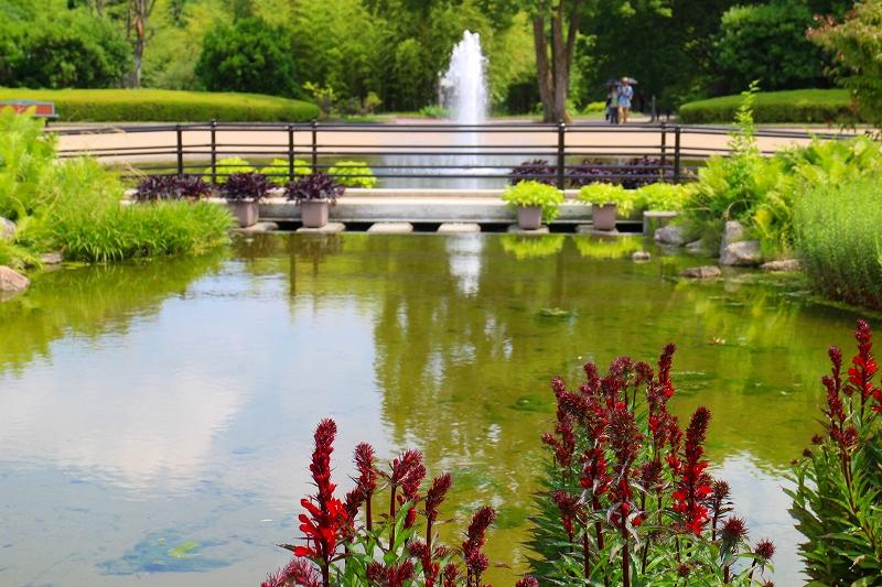 京都植物園内を散策20150625_e0237645_0283365.jpg