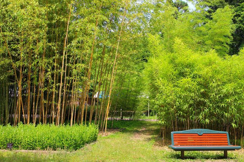 京都植物園内を散策20150625_e0237645_028619.jpg