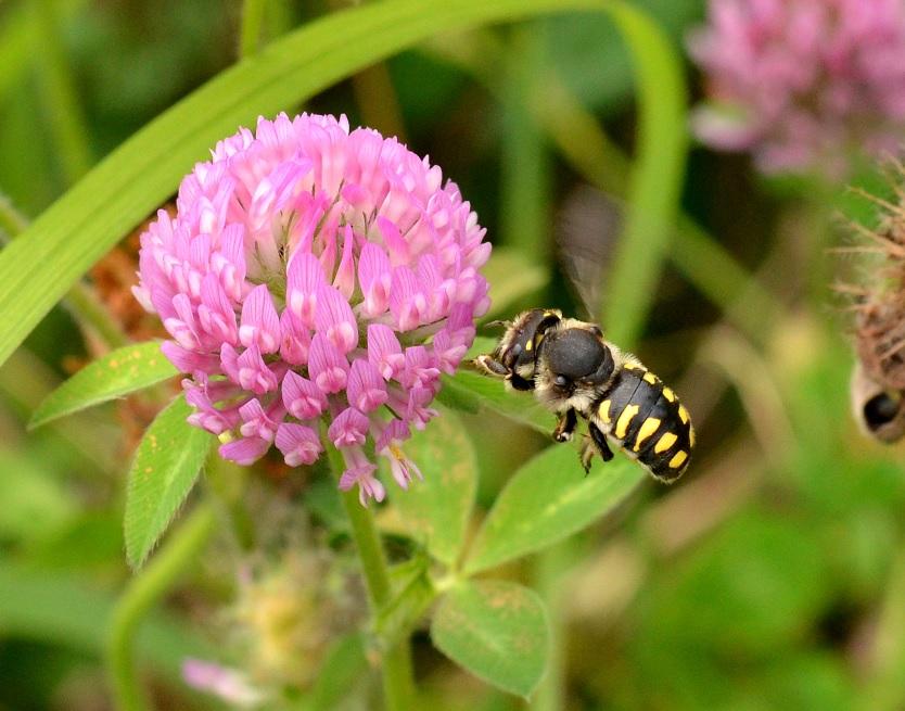 ハチとハスと美川と。_d0121678_148122.jpg