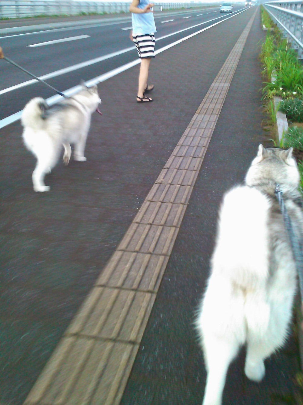 こうめちゃんとお散歩 (^o^)_c0049299_22385889.jpg