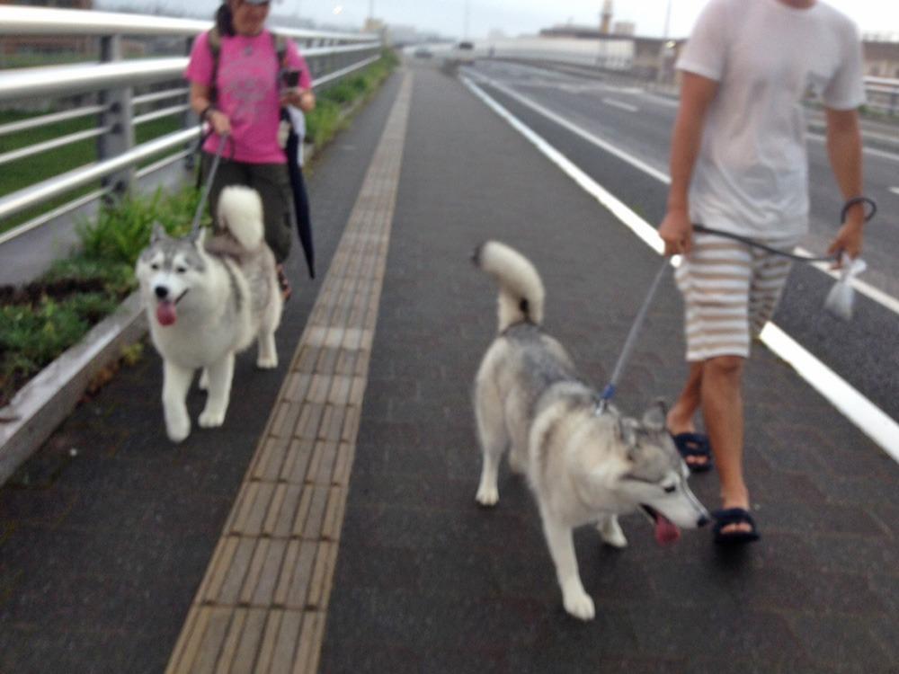こうめちゃんとお散歩 (^o^)_c0049299_2241740.jpg