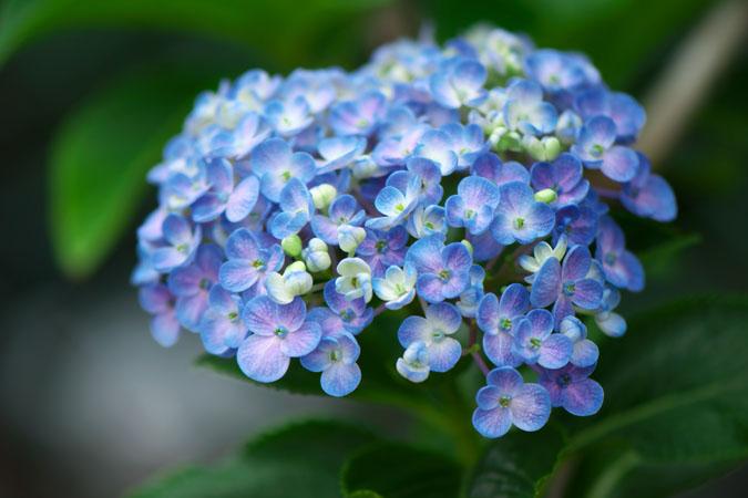 6月の我が家の庭2_a0263109_14202761.jpg
