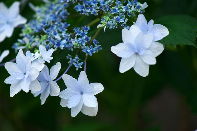 6月の我が家の庭2_a0263109_14204370.jpg