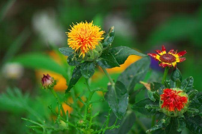 6月の我が家の庭2_a0263109_1421492.jpg