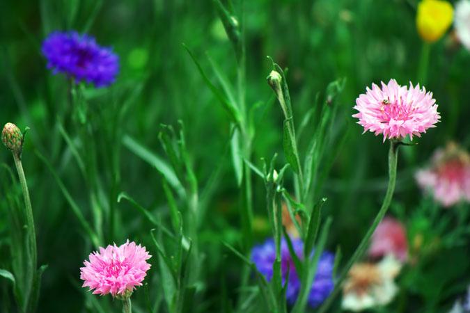 6月の我が家の庭2_a0263109_1422552.jpg