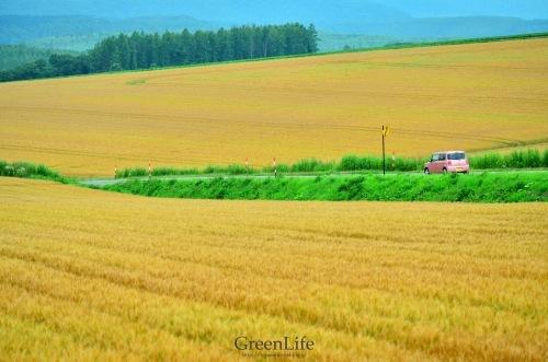 道_f0321522_20112745.jpg