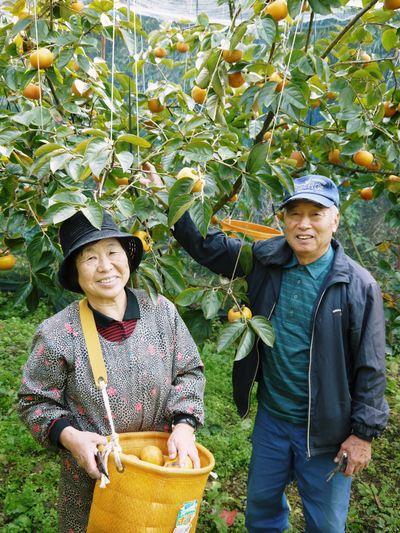 太秋柿 古川果樹園 今年も順調に成長中!摘果作業と枝吊り作業の惜しまぬ手間ひまをかけ育ています!_a0254656_19291982.jpg