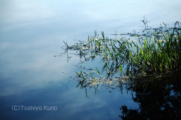 夏色の池_a0256586_20465200.jpg