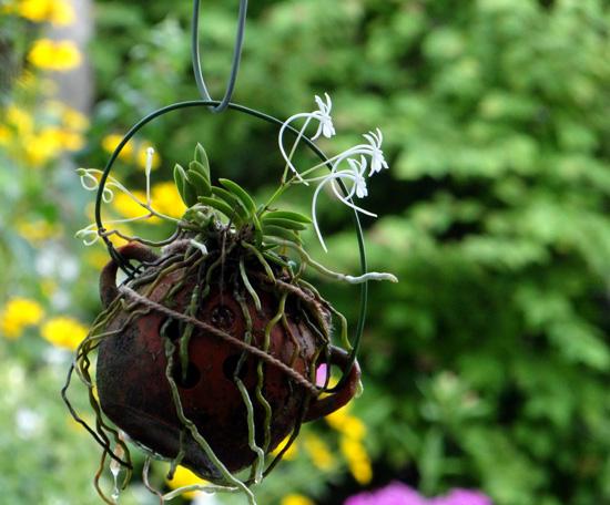 フウランが咲いて、コケモモの実が可愛くて~♪_a0136293_19272465.jpg