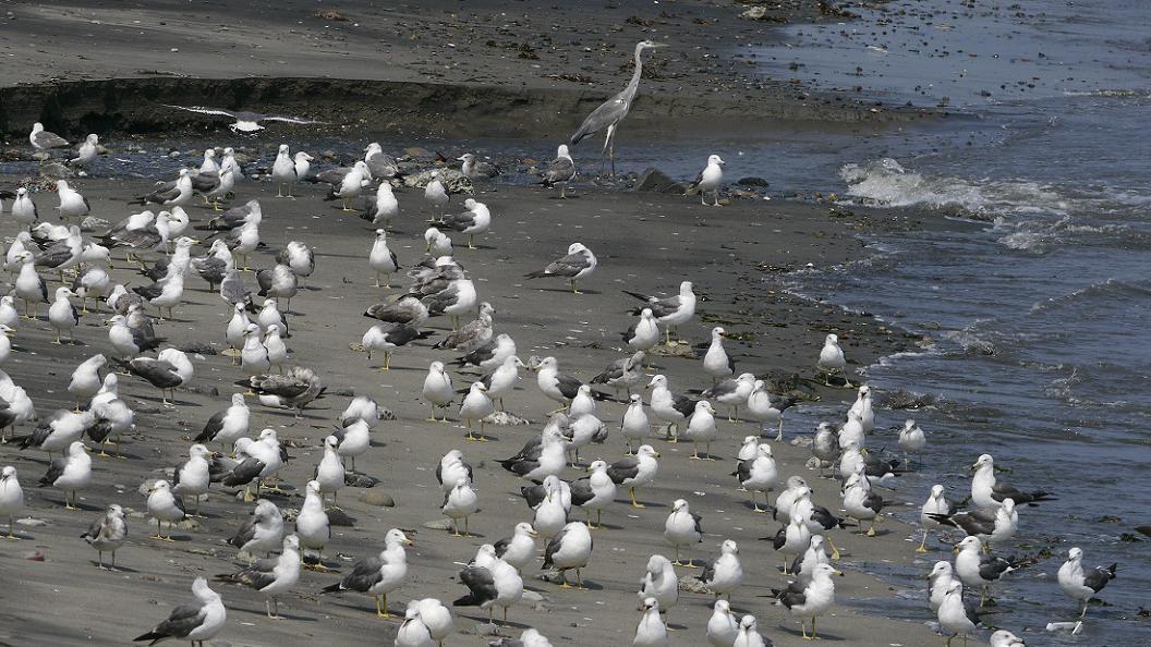 今 日 の 浜 辺 No.65  _d0039021_18354363.jpg