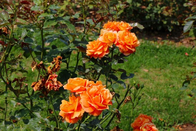 夏の花真っ盛りの【京都植物園】20150625_e0237645_9132288.jpg