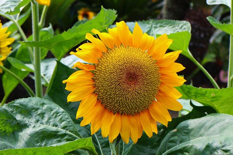 夏の花真っ盛りの【京都植物園】20150625_e0237645_935671.jpg