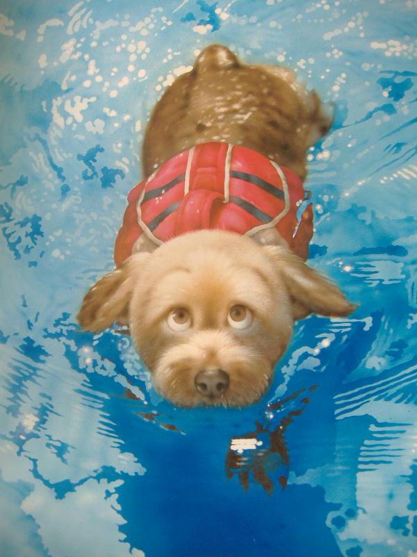 8月の 犬さん ・ 猫さん・・・!?_c0328479_2243342.jpg