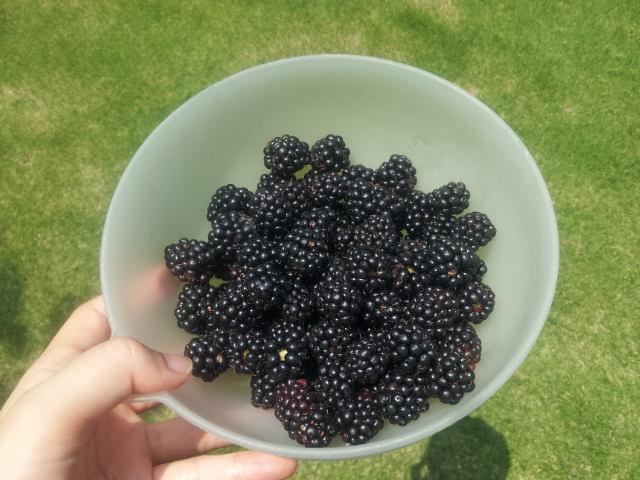 初収穫♪♪_f0244543_17334145.jpg